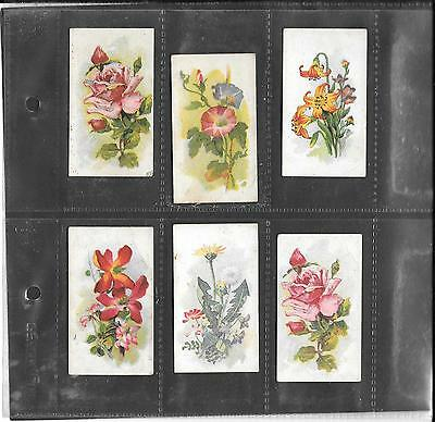 B.a.t. / Anonymous  - Flowers - 1915 - 6 Cards