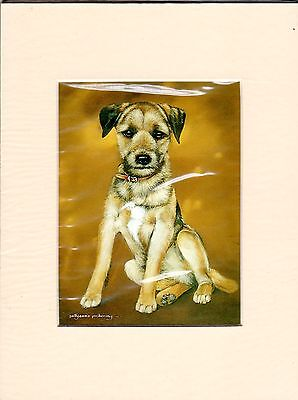 """8"""" X 6"""" MOUNTED  LITHOGRAPH PRINT of  A BORDER TERRIER STUDY"""