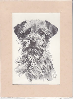 """Mounted  8"""" X 10"""" Pencil Drawing Of A Border Terrier Dog Head"""