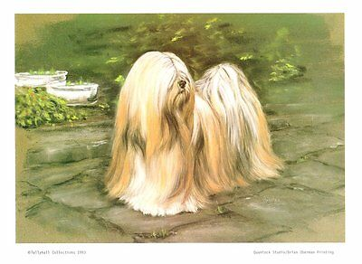 "11"" X 8"" SIGNED LIMITED EDITION PASTEL DRAWING PRINT of a LHASA APSO  -    DOG"