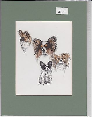 """8"""" X 6"""" MOUNTED  LITHOGRAPH PRINT of A PAPILLON GROUP  STUDY"""