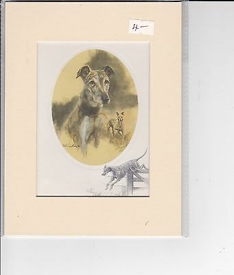 """8"""" X 6"""" MOUNTED  LITHOGRAPH PRINT of A GREYHOUND  STUDY"""