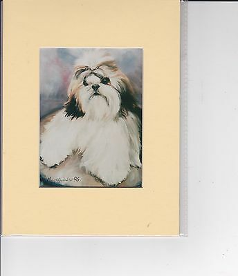 "8"" X 6"" MOUNTED  LITHOGRAPH PRINT of A SHIH-TZU HEAD  STUDY"