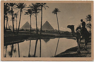 Old  Postcard The Pyramids of Giza  Camel