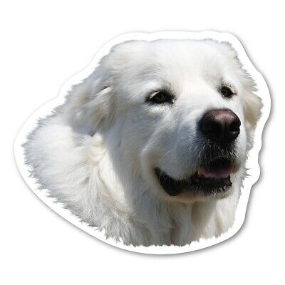 Great Pyrenees Magnet