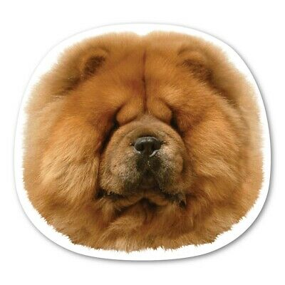 Chow Chow Magnet