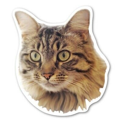 Maine Coon Cat Magnet
