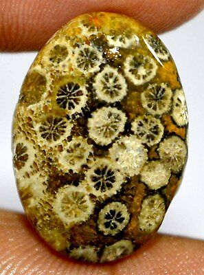 13^  Cts 100% NATURAL DESIGNER FOSSIL CORAL OVAL CABOCHON ATTRACTIVE GEMSTONES