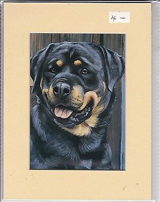 "8"" X 6"" MOUNTED  LITHOGRAPH PRINT of A ROTTWEILER HEAD STUDY"