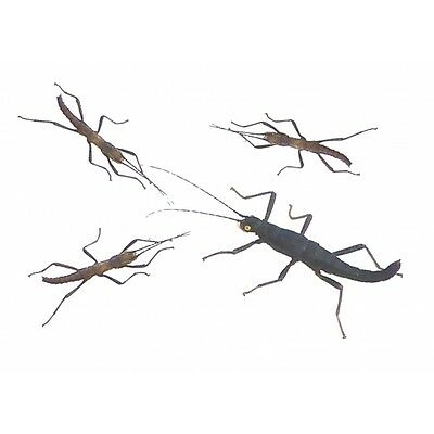 Black Beauty Stick Insect (Peruphasma Schultei) Nymphs x 4