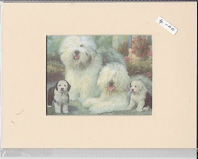 """8"""" X 6"""" MOUNTED  LITHOGRAPH PRINT of A OLD ENGLISH SHEEPDOG FAMILY"""