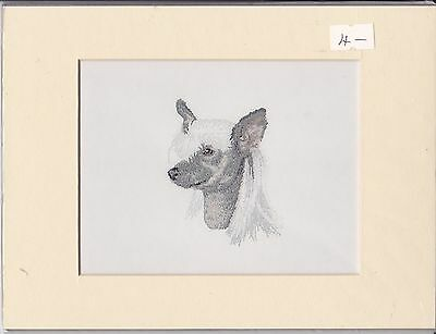 "8"" X 6"" MOUNTED  LITHOGRAPH PRINT of A CHINESE CRESTED HEAD"
