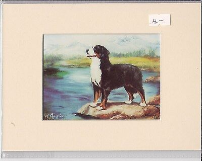 """8"""" X 6"""" MOUNTED  LITHOGRAPH PRINT of A BERNESE MOUNTAIN DOG"""