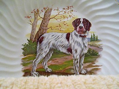 Vintage GERMAN WIREHAIRED POINTER Porcelain Plate ~ Dog