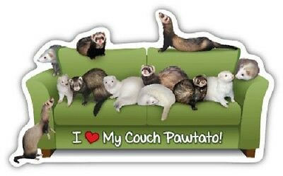 Ferret Couch Pawtato Car Magnet
