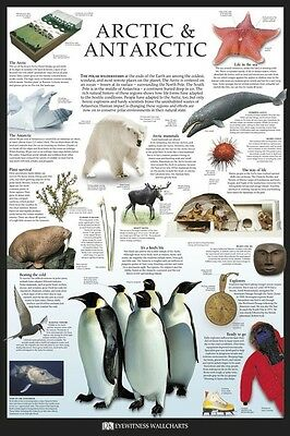 DK ARCTIC & ANTARCTICA FACTS ~ 24x36 Science Poster ~Wall Chart Penguin Teaching