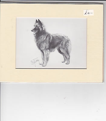 "MOUNTED  8"" x  6""   PENCIL DRAWING OF A BELGIAN SHEPHERD ( GRON ) DOG"
