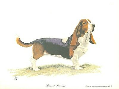 """8"""" X 10"""" OPEN EDITION PASTEL DRAWING  PRINT of  a  BASSET HOUND  DOG"""
