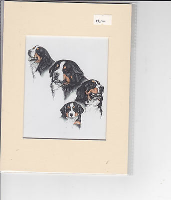 """8"""" x  6"""" MOUNTED OIL PAINTING PRINT of  BERNESE MOUNTAIN DOG STUDY"""