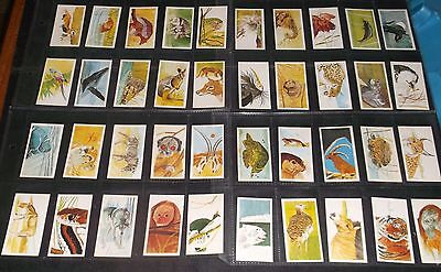 Set Of 40 Brooke Bond Tea Cards Vanishing Wildlife
