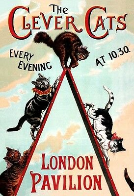 Victorian London Pavilion Music Hall Act - The Clever Cats A3 Poster Reprint
