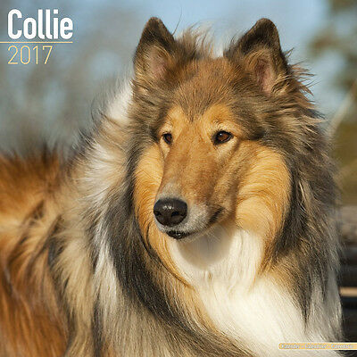 """Collie 2017 Wall Calendar by Avonside (12"""" x 24"""" when opened)"""