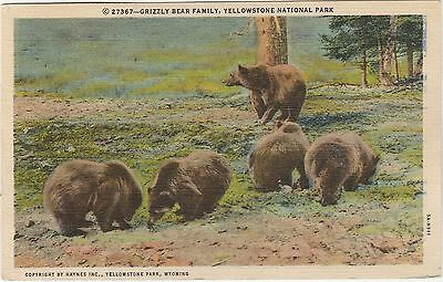 Yellowstone National Park Wyoming WY Vintage Postcard Grizzly Bear Family Linen