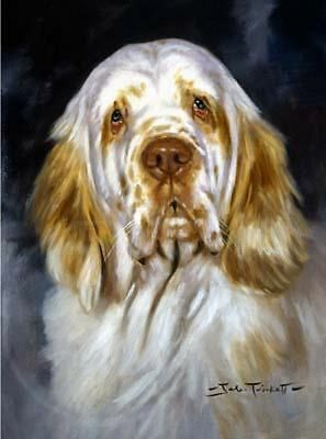 CLUMBER SPANIEL GUNDOG DOG ART PRINT - Head Study by John Trickett - FREE Mount
