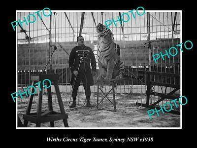 OLD LARGE HISTORIC PHOTO OF WIRTHS CIRCUS TIGER TAMER, SYDNEY c1938
