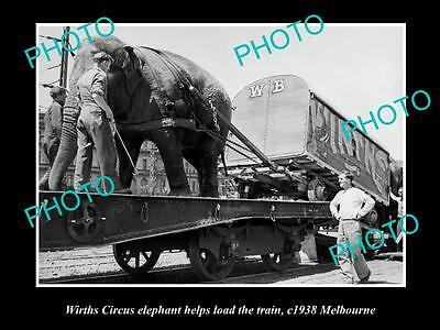 OLD LARGE HISTORIC PHOTO OF WIRTHS CIRCUS ELEPHANT LOADING THE TRAIN c1938