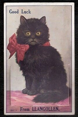 Novelty Pullout Black Cat From Llangollen Coloured Postcard