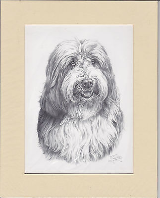 "8"" X 10"" MOUNTED PENCIL DRAWING PRINT of a  BEARDED COLLIE HEAD STUDY   DOG"