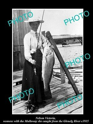OLD LARGE HISTORIC PHOTO OF NELSON VICTORIA, FISHERMAN WITH MULLOWAY CATCH c1915