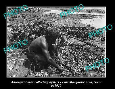 OLD LARGE HISTORIC PHOTO OF ABORIGINAL MAN COLLECTING OYSTERS, c1910 NSW