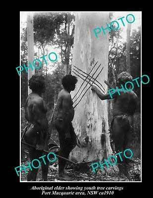 OLD LARGE HISTORIC PHOTO OF NSW ABORIGINAL, ELDER WITH TREE CARVINGS ca 1910