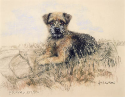 BORDER TERRIER DOG FINE ART LIMITED EDITION PRINT - Laying on Jacket