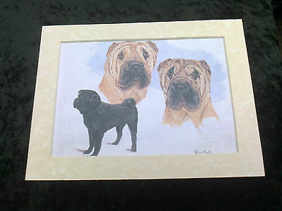 """MOUNTED 8 """" x  10 """"  OIL PAINTING PRINT STUDY of the  SHAR PEI  DOG"""