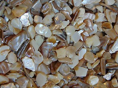 200g Mother Of Pearl Shell Pieces 10-20mm Crafting Centre Piece Jewellery Making
