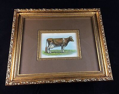 Professionally Framed Biggle Book Cow Guernsey Print - Extremely Nice