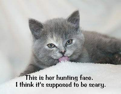 METAL REFRIGERATOR MAGNET Hunting Face Think Supposed To Be Scary Cat Cats Humor
