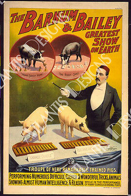 Barnum and Bailey Pigs Vintage Poster Fridge Magnet 2 x 3