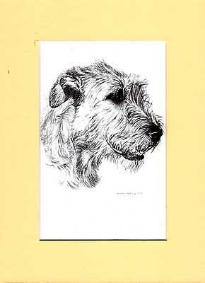 "MOUNTED   8"" x  6""  PENCIL DRAWING PRINT of A IRISH WOLFHOUND HEAD STUDY"