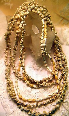 """Vintage 3 Hawaiian Lei Luau Shell Necklaces 24""""-36"""" Long - Great Cond."""