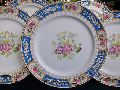 SUTHERLAND CHINA, H&M- EVESHAM R2278 (c1947+) DINNER PLATE(s)- EXCELLENT! GILT!