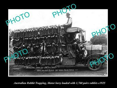 OLD HISTORIC PHOTO OF AUSTRALIAN RABBIT TRAPPING TRUCK WITH 1760 RABBITS c1925