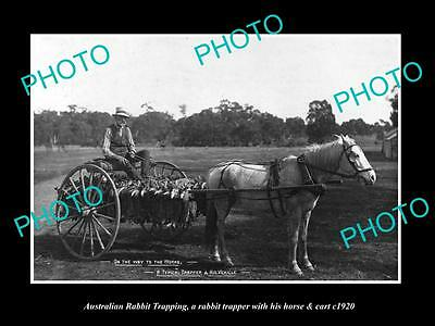 Old Large Historic Photo Of Australian Rabbit Trapper With His Horse & Cart 1920