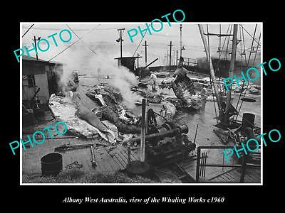 OLD LARGE HISTORIC PHOTO OF ALBANY WEST AUSTRALIA, VIEW OF WHALING WORKS c1960