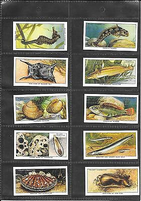 Will's - The Sea Shore - 1938 - Full Set Of Reproduction Cards