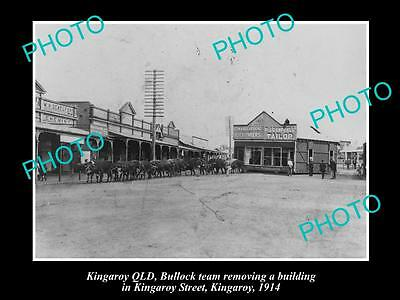 OLD LARGE HISTORIC PHOTO OF KINGAROY QLD, BULLOCK TEAM MOVING A BUILING c1914