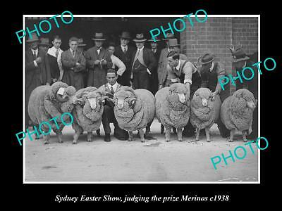 OLD LARGE HISTORIC PHOTO OF JUDGING THE MARINO WOOL, SYDNEY EASTER SHOW c1938